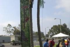 palm-tree-climb-2